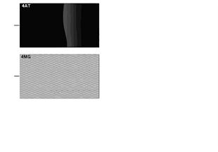 Strona z wzorem, listwy wewnętrzne