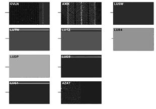แผ่นตัวอย่าง, สีของเบาะ, แบบ Lines