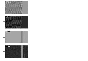 무늬면, 쿠션 색상, Modern Line