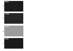 Vzorovaná strana barvy čalounění